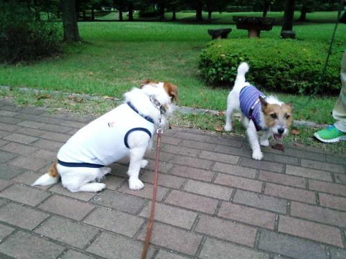 2012長岡公園601