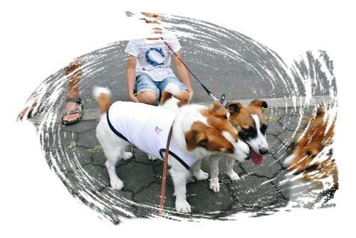2012長岡公園808