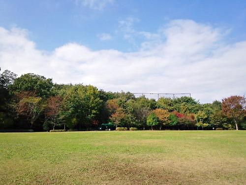 2012草花木098