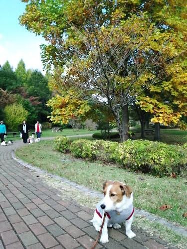 2012長岡公園909