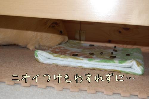 別荘改築7