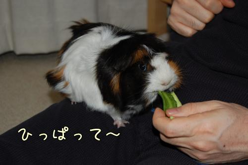 おっちゃんデビュー3