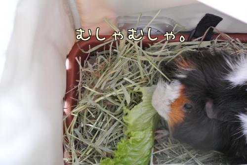 大阪梅ちゃん☆前編4