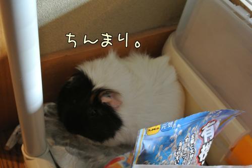 大阪梅ちゃん☆後編6