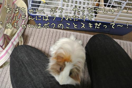 梅ちゃんとルル!?11