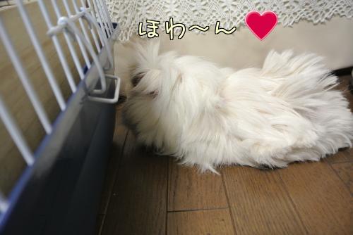 梅ちゃんとルル!?9
