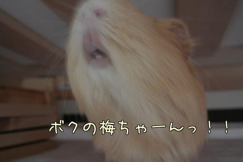 梅ちゃんとルル!?15