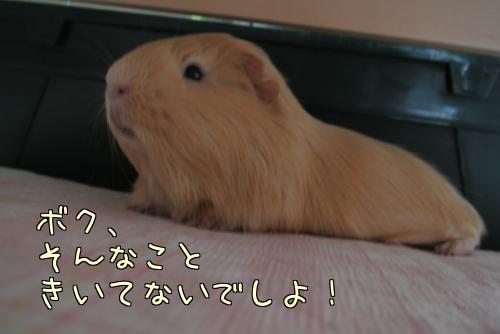 梅ちゃんとルル!?13