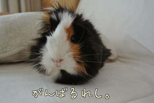 おっちゃんデビュー11