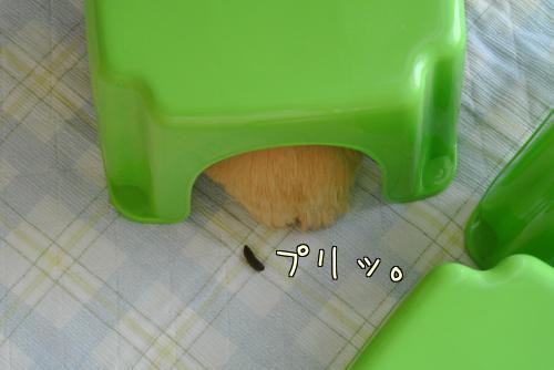 部屋んぽサークル2