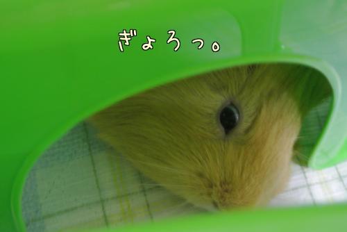 部屋んぽサークル8