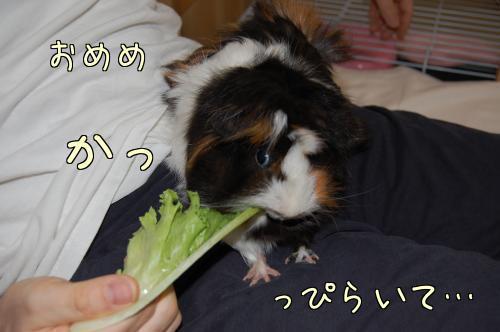 おっちゃんと一緒~梅ちゃん編2