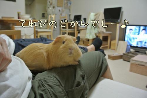 おっちゃんと一緒~ハル編11