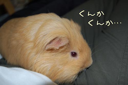 おっちゃんと一緒~ハル編7