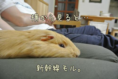 おっちゃんと一緒~ハル編14