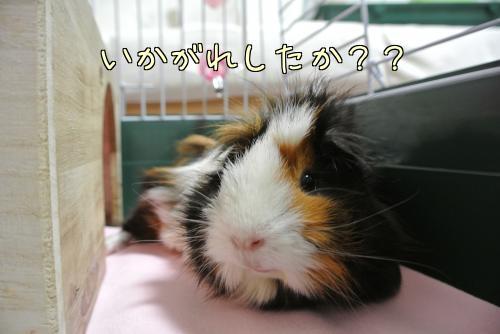 動く梅ちゃん5
