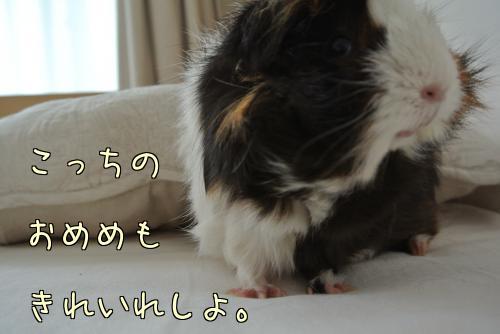 動く梅ちゃん2