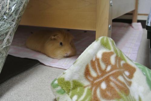 寝袋ハルちん1