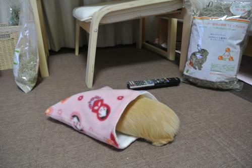 寝袋ハルちん3