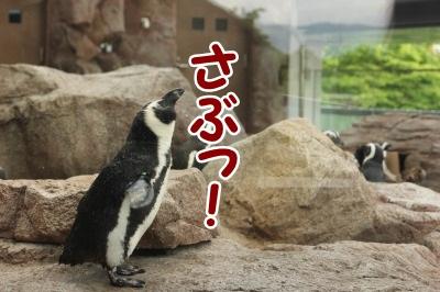 ペンギン10