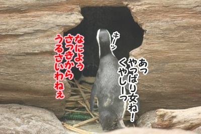 ペンギン15