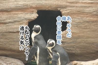 ペンギン14