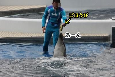イルカ13