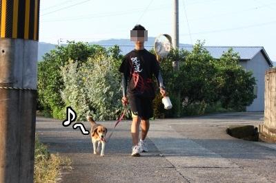 いつもの散歩1