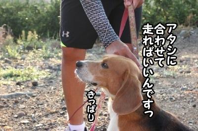 いつもの散歩4
