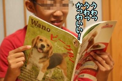 wan2.jpg