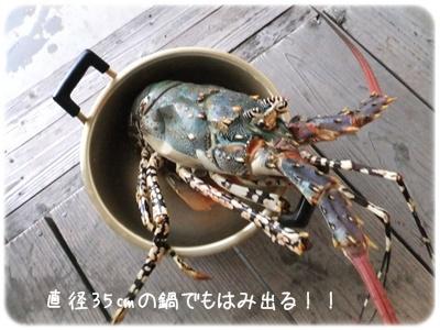 2014_11130017.jpg