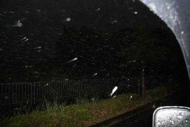 ゴリラ豪雨0001