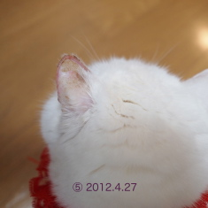 20120427urabanashi.jpg