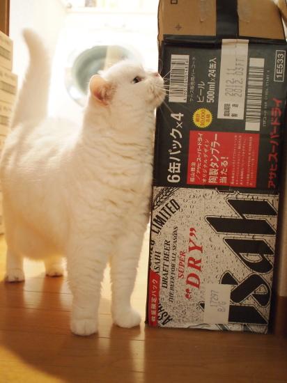 P5109210urabanashi.jpg