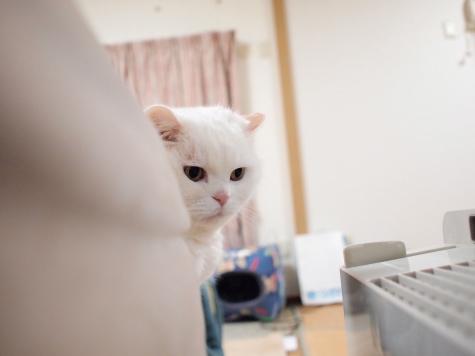 P5119330urabanashi.jpg