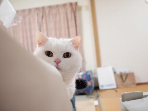 P5119335urabanashi.jpg
