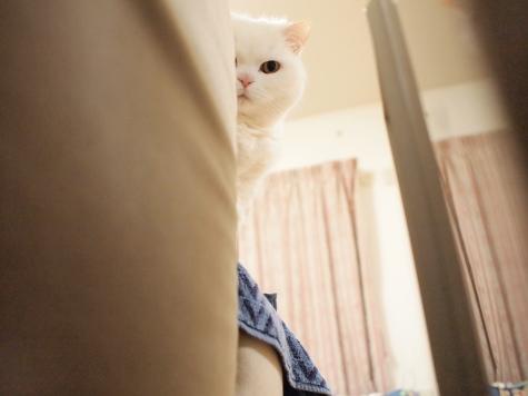 P5119337urabanashi.jpg