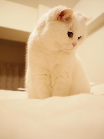 P5159555urabanashi.jpg