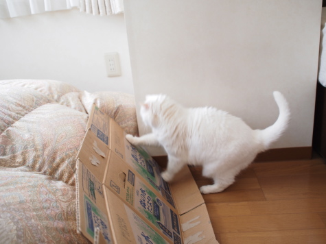 P5270003urabanashi.jpg