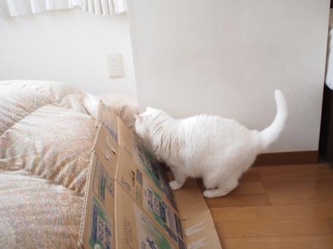 P5270004urabanashi.jpg