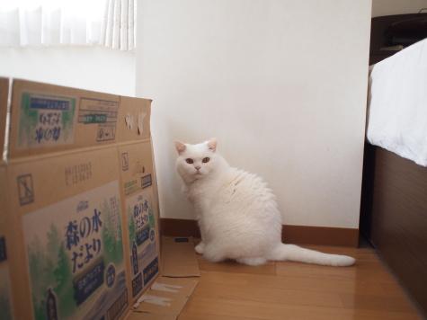 P5270011urabanashi.jpg