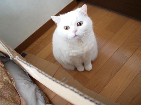 P5279992urabanashi.jpg