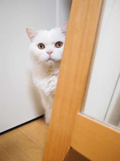 P6020397urabanashi.jpg