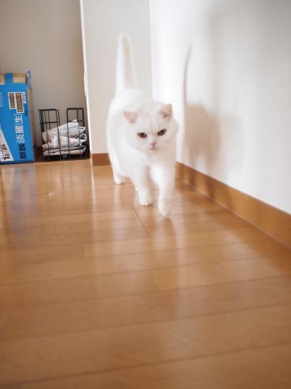 P6140971urabanashi.jpg