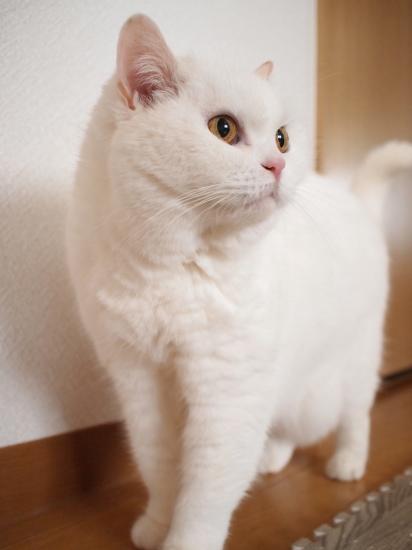 P6140974urabanashi.jpg