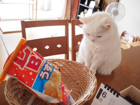 P6231496urabanashi.jpg