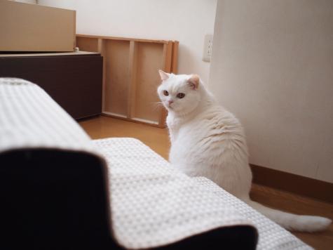 P6241565urabanashi.jpg