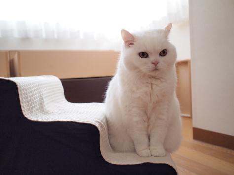 P6241567urabanashi.jpg