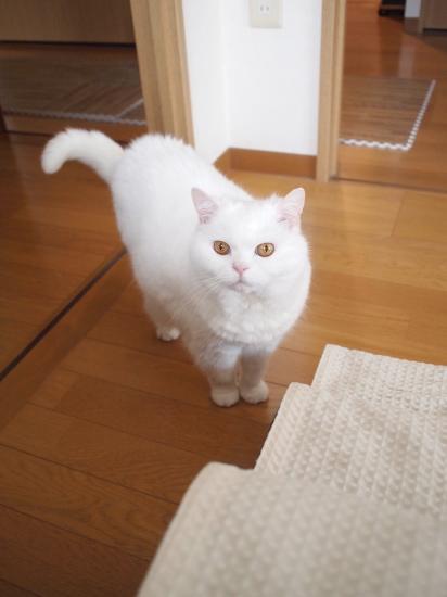 P6241601urabanashi.jpg