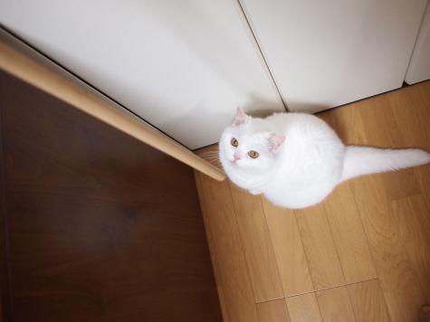 P6291867urabanashi.jpg